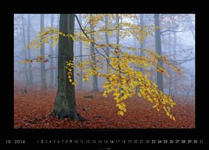 Die Pracht des Waldes