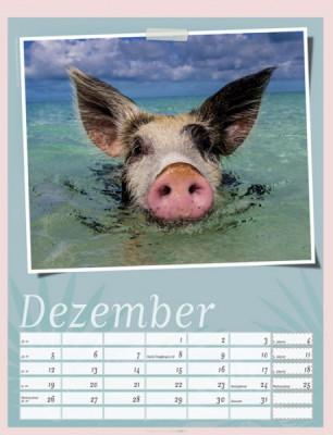 Schweinchen im Paradies